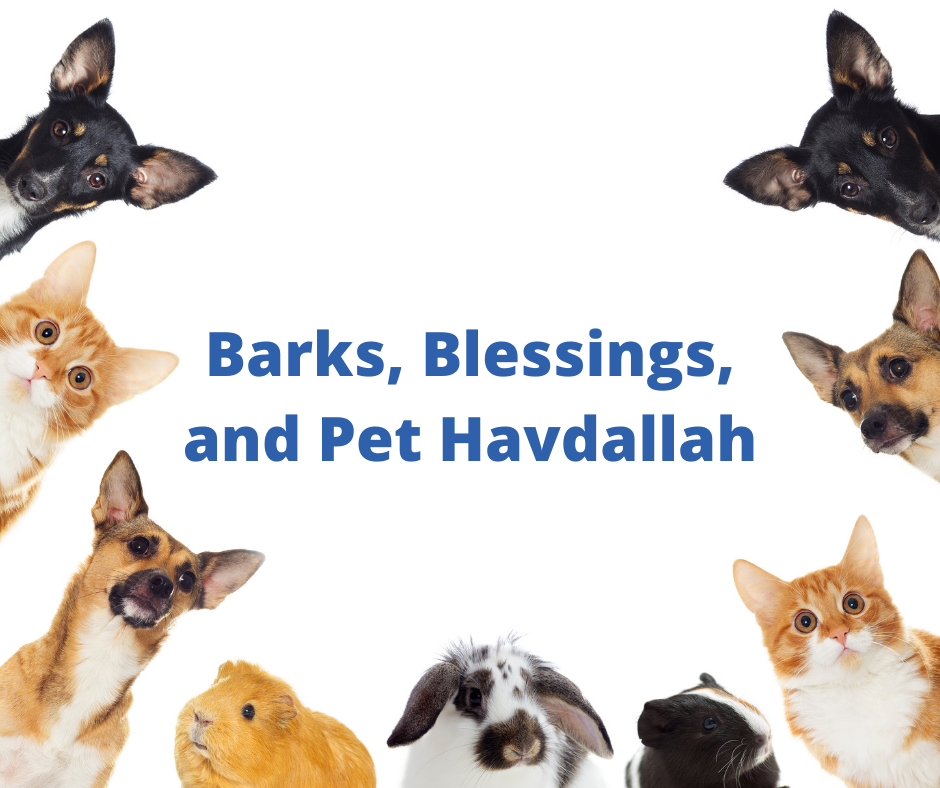 Barks, Blessings, and Pet Havdallah