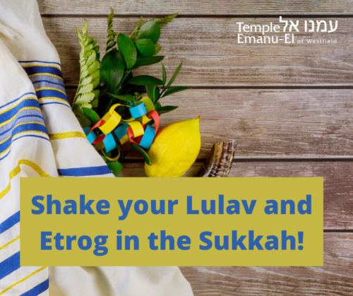 Shake your Lulav and Etrog in the Sukkah! (1)